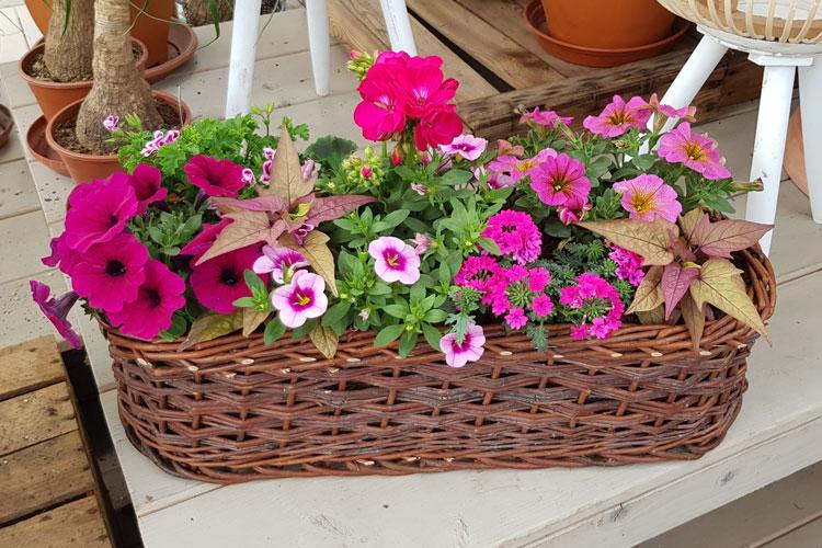 Jardinière Rose