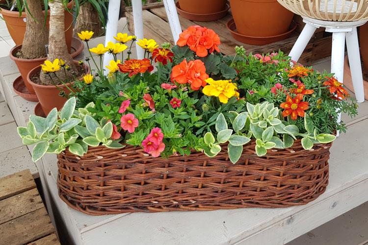 Jardinière Vert, rose et jaune