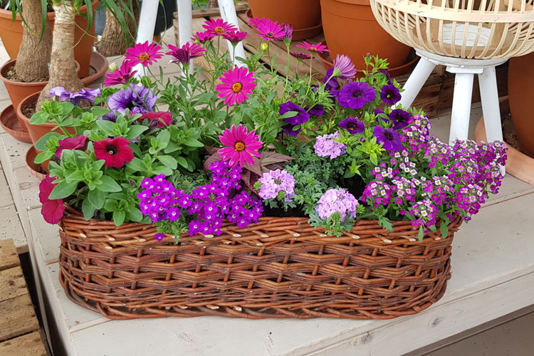 Jardinière Violet et blanc