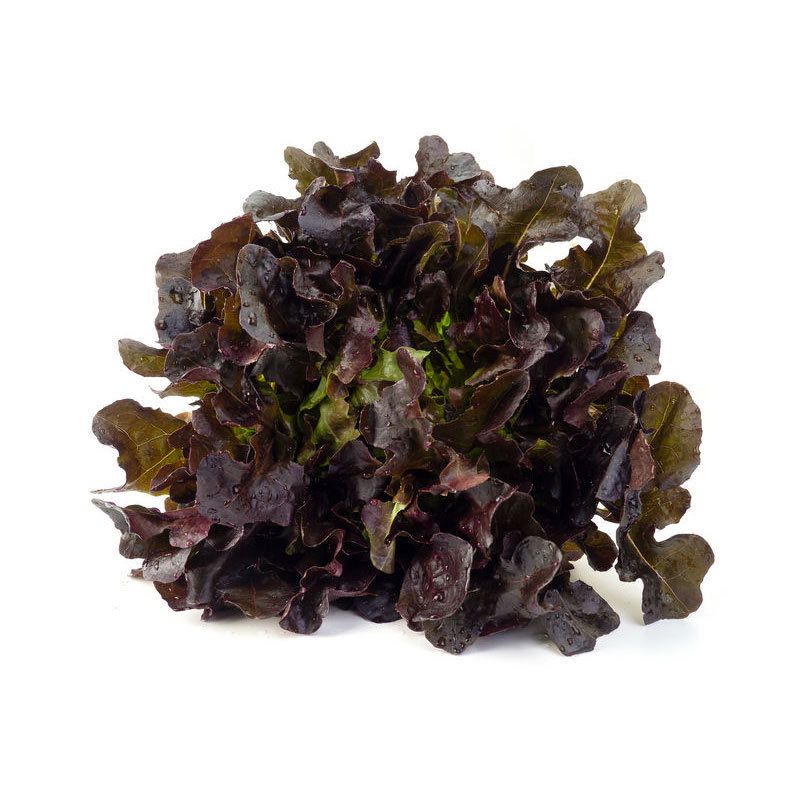 Légumes Batavia rouge