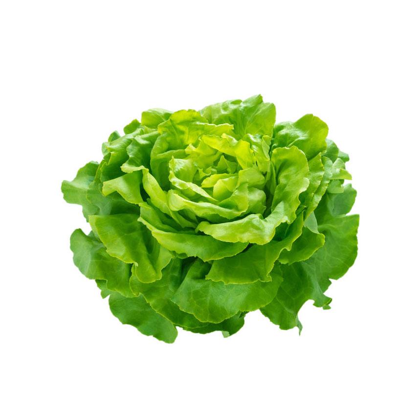 Légumes Laitue Appia